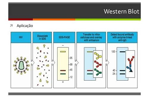 baixar de video western blot