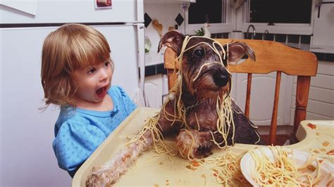 pasta good  dogs referencecom