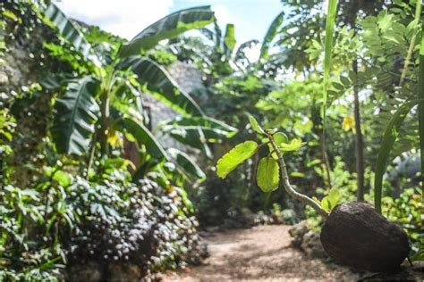 Plants To Start A Tropical Food Forest Workshop