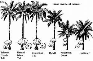 Coconproj