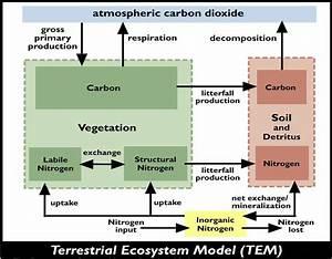 Ecosystems And Biogeochemical Models