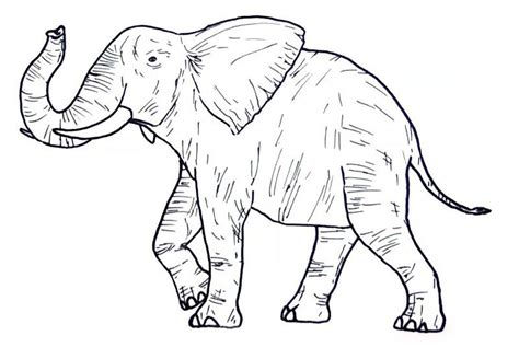 Wild Animal Coloring Pages Elephant Also see the category
