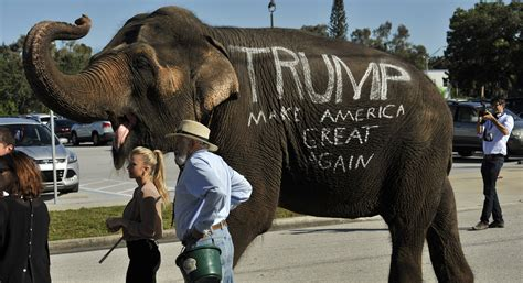 elephant trump donald sad elephants circus without tusks politico republican republicans ap gingrich convention rally face gop story retiring 1160