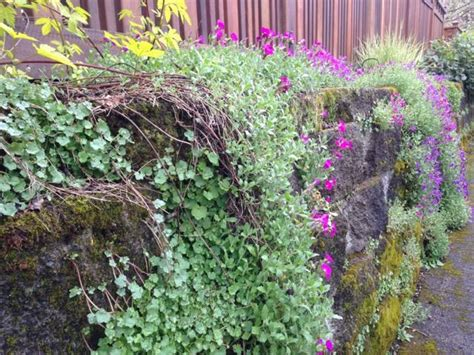 wall plants for shade 1000 images about retaining wall on pinterest virginia wooden walls and in the fall
