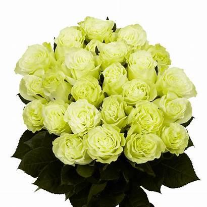 Roses Dozen Delivery Flower Valentine Globalrose Flowers