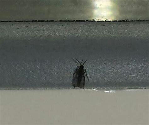 Viele Kleine Fliegen Auf Der Fensterbank  Dringende Hilfe