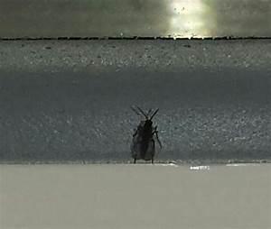 Kleine Käfer In Der Küche : viele kleine fliegen auf der fensterbank dringende hilfe k che insekten kammerj ger ~ Frokenaadalensverden.com Haus und Dekorationen
