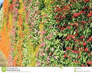 Mur De Fleurs : jardin de verticale de mur de fleur image stock image du foug re texture 38184363 ~ Farleysfitness.com Idées de Décoration