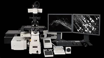 System Imaging Multiphoton Nikon Resolution Super Brain