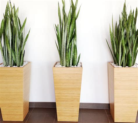 Grow Ls For House Plants by Pics For Gt Modern Indoor Plants