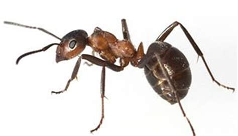 ant exterminator jackson ms pest control services