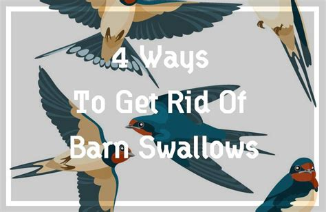 how to get rid of barn swallows on porch complete guide top 3 efficient repellents 4