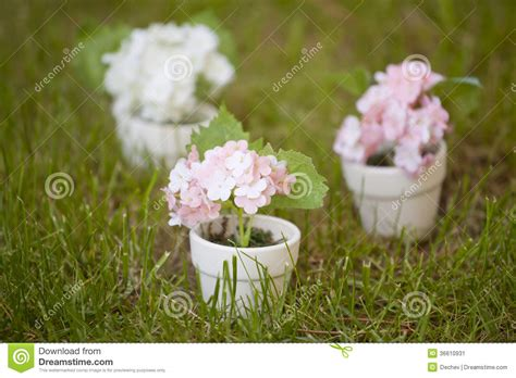 small flowering plants for pots small pots with flowers stock image image of meadow 36610931