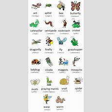 Forum  Learn English  Insects And Bugs Vocabulary Words List  Fluent Land Ingles