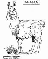 Llama Coloring Pages Zoo Animal Printable Sheets Animals Sheet Cartoon Exhibit Activities Para Wild Cactus Colorir sketch template