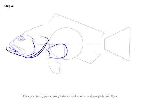 grouper draw step drawing drawingtutorials101 tutorials