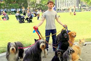 6 solid ways to de stress for Puppy dog walker