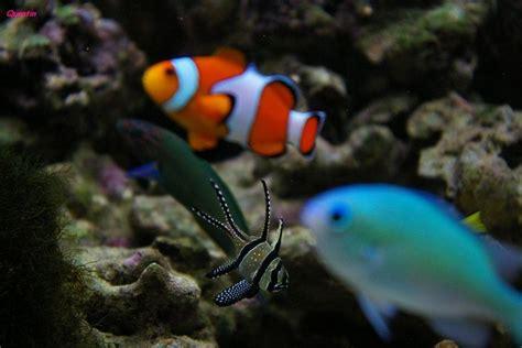 poisson en aquarium poisson exotique d aquarium en eau de mer photo max