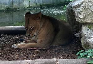 Lecker Essen Und Trinken Duisburg : zoo duisburg foto und erlebnisbericht teil 2 ~ Orissabook.com Haus und Dekorationen