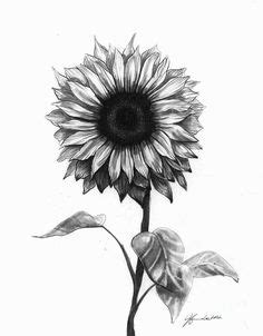 The 25+ best Sunflower drawing ideas on Pinterest   Sunflower tattoo thigh, Sunflower images for