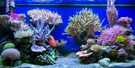 Reef Aquarium Aquascaping by The Powerful Aquascape Of Reefer Jafar Reef
