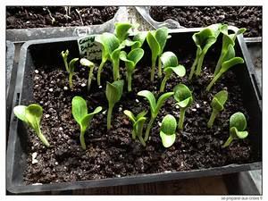 Quand Planter Courgette : des pots semis 15 30 fois moins chers se preparer ~ Dallasstarsshop.com Idées de Décoration