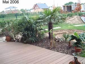 Garten 2005 exoten und palmen claus willich for Französischer balkon mit garten mit palmen
