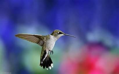 Bird Colibri Wallpapers9 Background Desktop Hummingbird Colorful