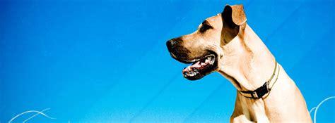 dog facebook cover