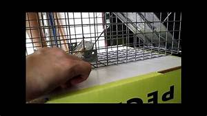 Setting And Catching A Squirrel In A Havahart 1030 Trap