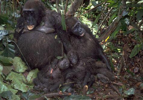 Gorilla Resumen by Alternativa Renovable Con Tecnolog 205 As L 205 Mpias Desastres Naturales 243 191 Provocados Por El
