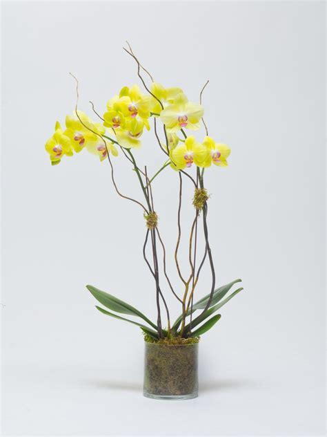 orchid arrangements orchid floral arrangements by lilium floral design