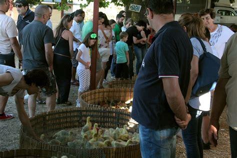 Mercato Animali Da Cortile Fiera Di Bagnaia Bilancio Positivo Per La Mostra Mercato