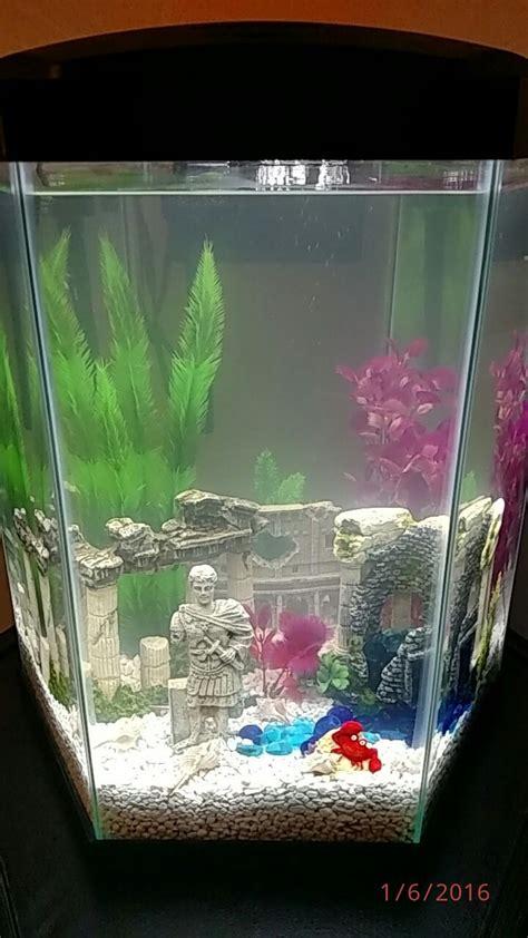 cloudy aquarium water new tank no fish cloudy water my aquarium club