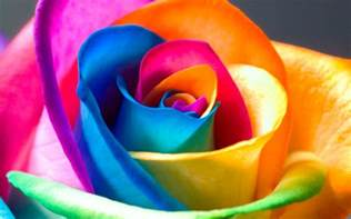 Colorful Roses Pictures Free