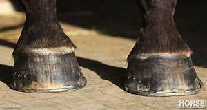 Guide To Horse Hoof Problems