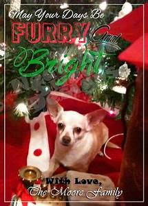 5 X 7 Printable Custom Pet Christmas Card Pet