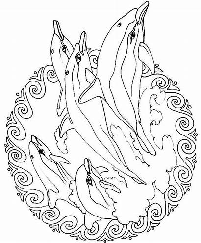 Coloring Pages Realistic Animals Animal Printable