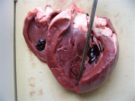 cuisiner coeur de porc la dissection une activité théorique science et