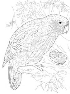 kakapo parrot coloring page  printable coloring pages