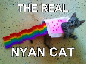 Funny Cats with Words