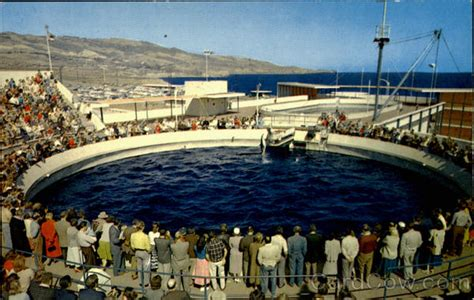 porpoise games time marineland   pacific los angeles ca