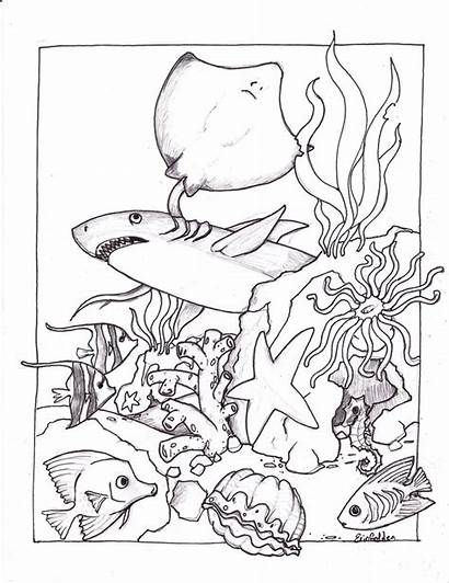 Coloring Ocean Pages Creatures Printable