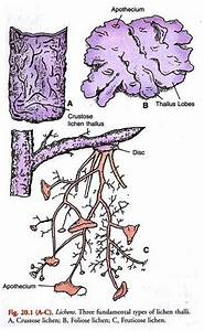 Examples Of Lichens  With Diagram