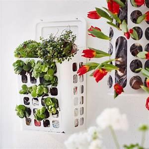 Plante Au Mur. mur v g tal version plantes grimpantes dans l avenue ... 168283907db4