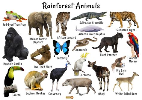 Rainforest Animals List Adaptations Pictures