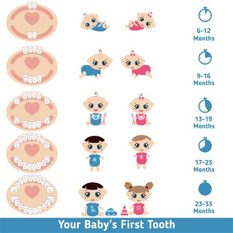 Baby Teething Chart Symptoms Teething When Do Babies