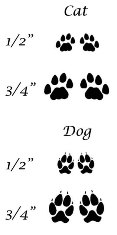 difffernce  cat  dogs paws bing images