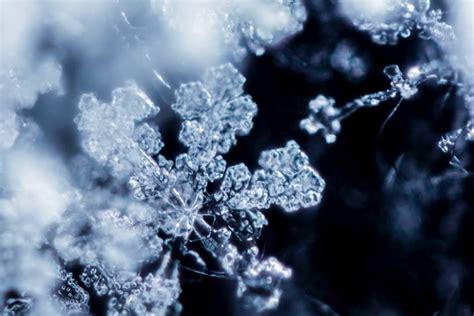 majestic close  pictures  snowflakes  photo argus