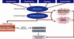Androgens Modulate Endothelial Function And Endothelial